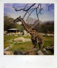 http://photo.mollywoodward.com/files/gimgs/th-54_25_mollywoodwardpolaroids052.jpg