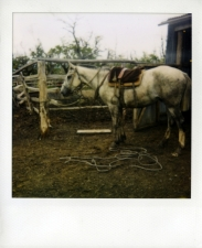 http://photo.mollywoodward.com/files/gimgs/th-54_25_mollywoodwardpolaroids055.jpg