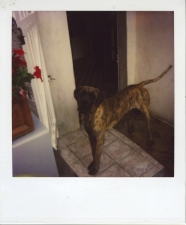 http://photo.mollywoodward.com/files/gimgs/th-54_25_mollywoodwardpolaroids079.jpg