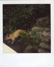http://photo.mollywoodward.com/files/gimgs/th-54_25_mollywoodwardpolaroids087.jpg