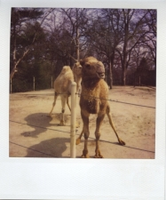 http://photo.mollywoodward.com/files/gimgs/th-54_25_mollywoodwardpolaroids117.jpg