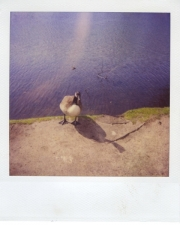 http://photo.mollywoodward.com/files/gimgs/th-54_25_mollywoodwardpolaroids118.jpg