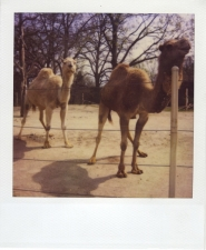 http://photo.mollywoodward.com/files/gimgs/th-54_25_mollywoodwardpolaroids119.jpg